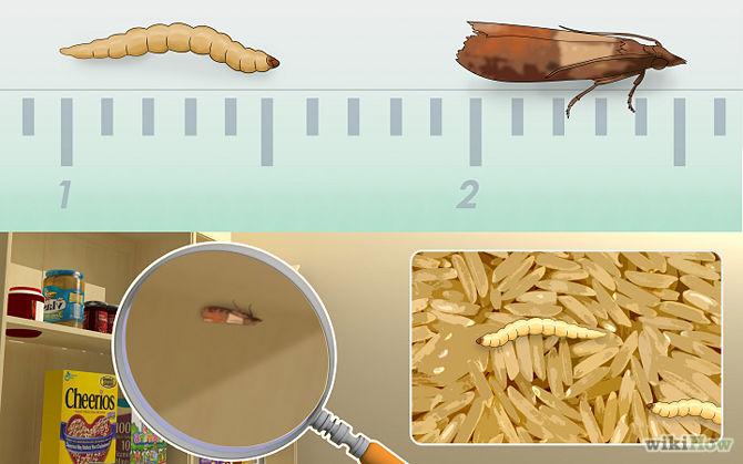 Denuncian la presencia de gusanos en paquetes de arroz - Como eliminar la polilla ...