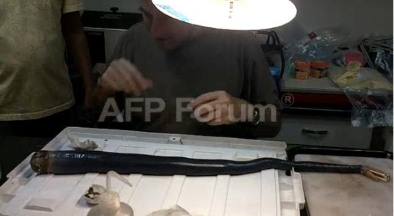 El molusco | AFP Forum