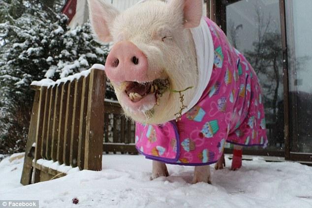 Esther: la chanchita maravillosa | Facebook