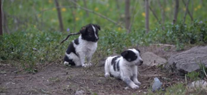 Captura   The Puppies of Chernobyl