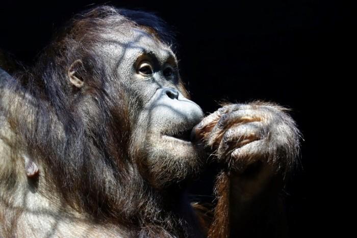 Mujer es condenada tres años por masturbar un mono