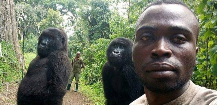 selfie de gorilas con guardabosques