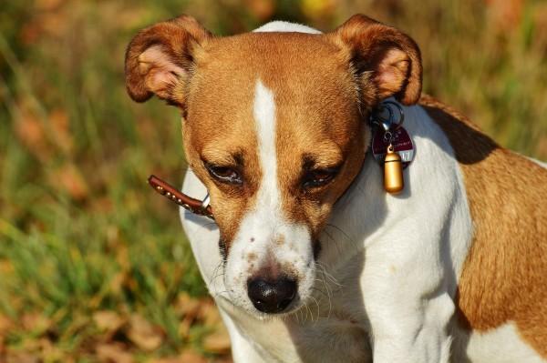 Insólito: Familia vende a su perro porque