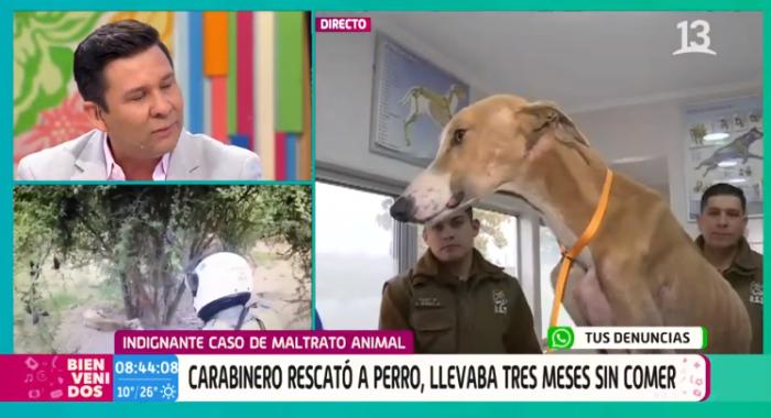caso de maltrato animal en Casablanca, perro desnutrido