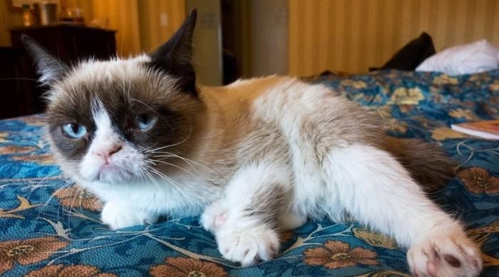 Murió Grumpy Cat