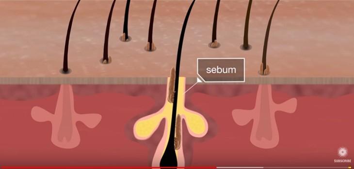 acaros viven en los poros de la piel