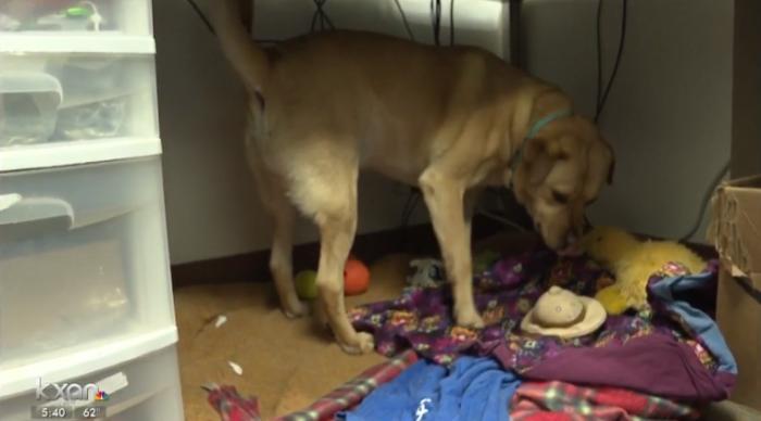perrito roba ropa de refugio