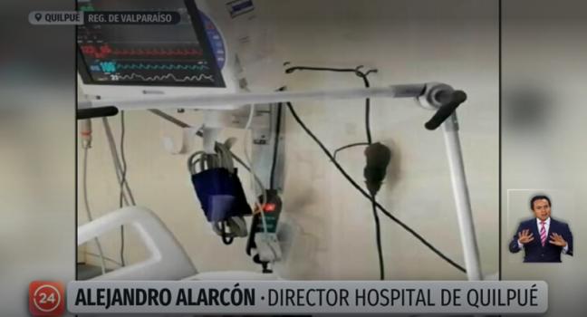 raton en hospital de quilpue