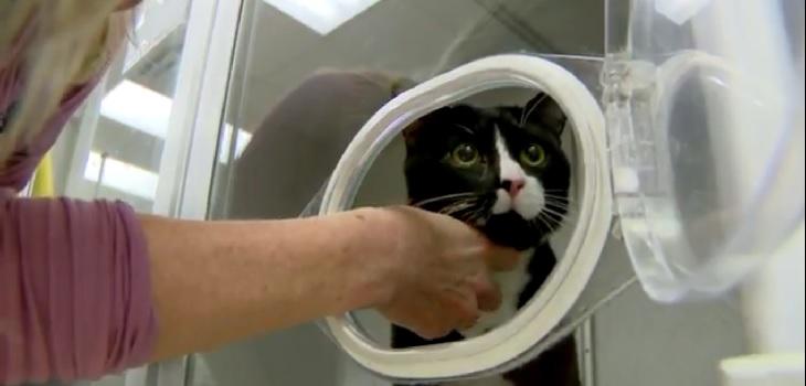 Gato logró sobrevivir a un ciclo dentro de una lavadora