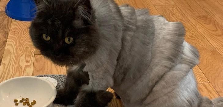 Gato acordeón genera burlas en redes