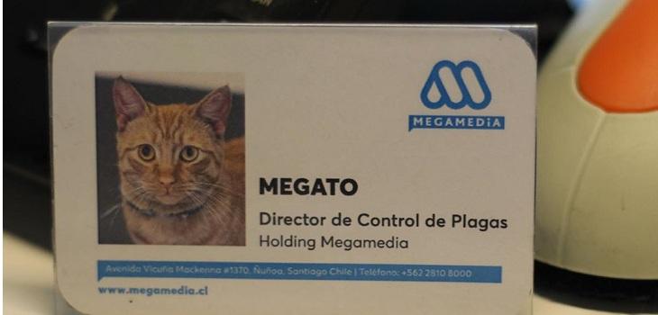 megato tiene su credencial de mega