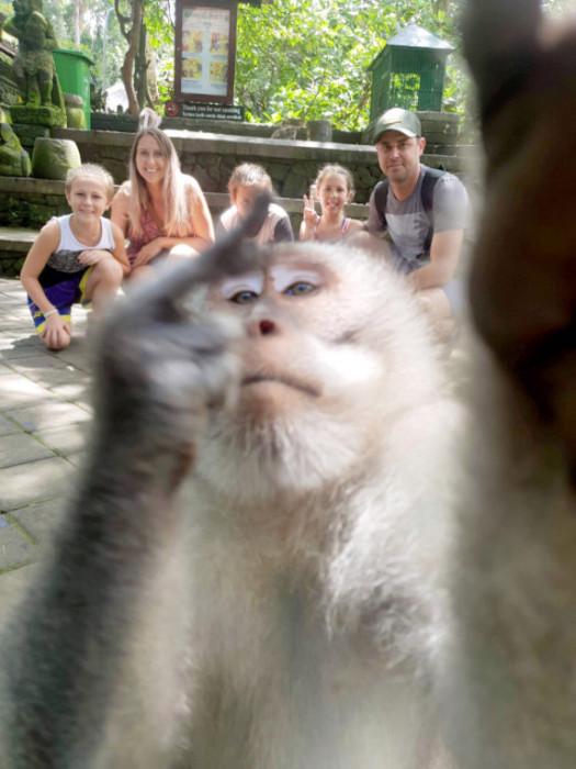 Mono se roba la película en fotos