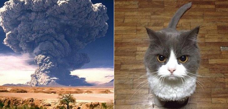 geofisico comparo a volcanes con gatos