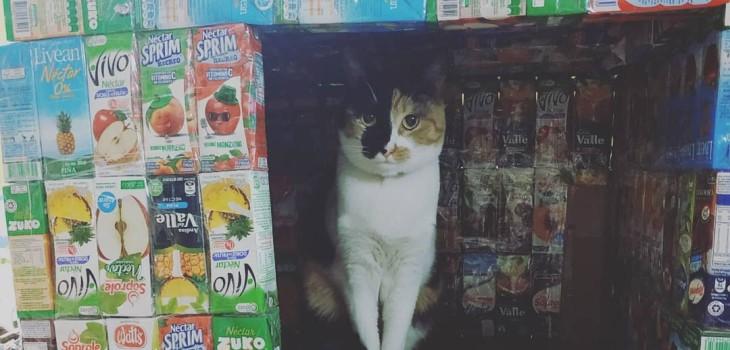 joven construye casa para animales de la calle