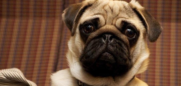Brutal maltrato animal terminó dejando a un perro con adicción al alcohol y a la marihuana