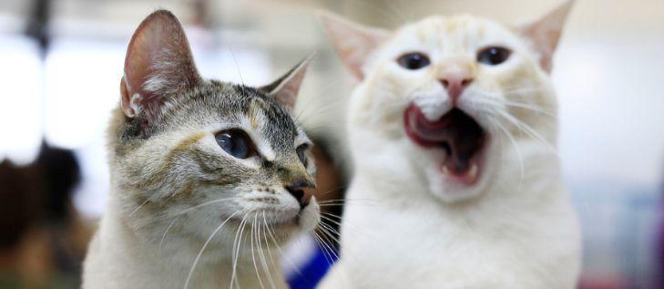 Cuidar a los gatos de las lámparas de sal