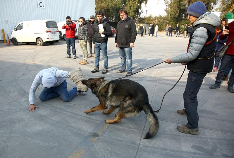 La escena de Juegos de Poder que contó con perros adiestrados