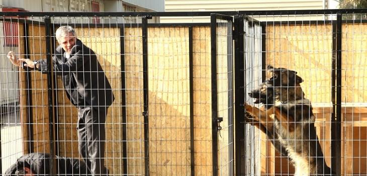 El ataque de perros en Juegos de Poder que se robó las miradas