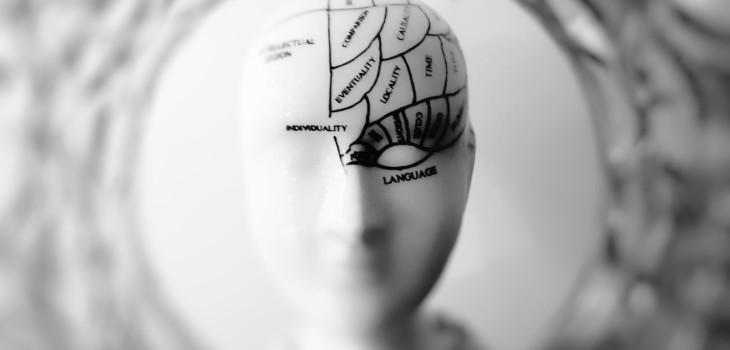 Curiosidades del cerebro