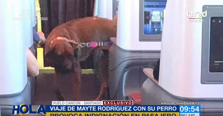 Denuncian a Mayte Rodríguez por viajar con su perrita en cabina de avión
