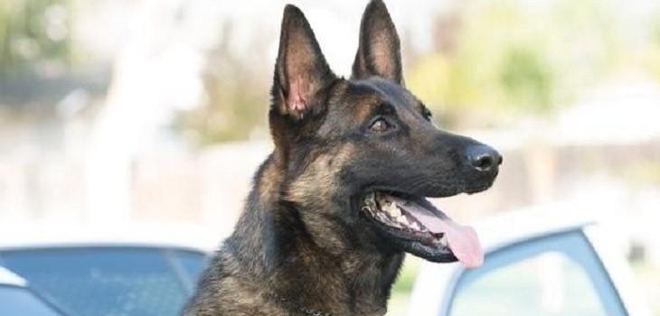 ozzy perro policial fallecido
