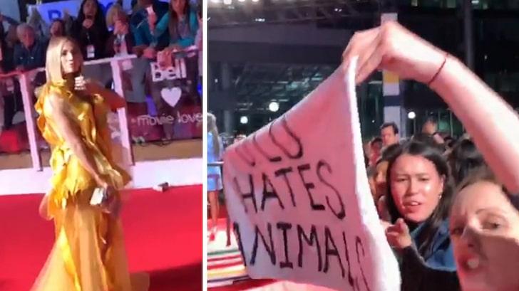 Animalistas funaron a Jennifer Lopez