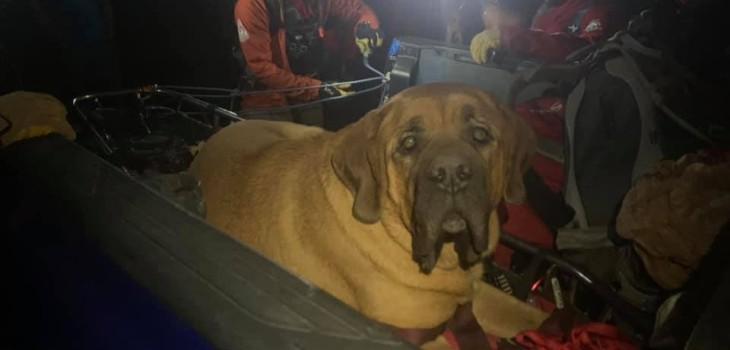 Perro de 86 kilos fue de excursión con su dueño pero se cansó y tuvo que ser rescatado: es viral
