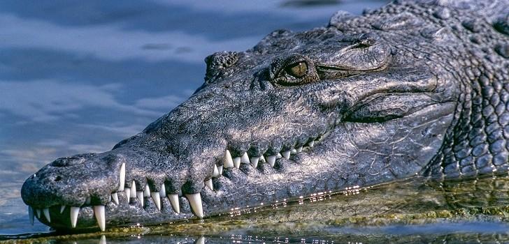 Australiano s salvó de milagro de ser devorado por un cocodrilo: metió un dedo en su ojo