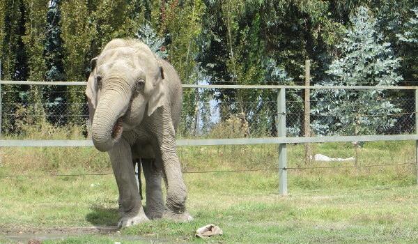 Muere Elefanta Ramba