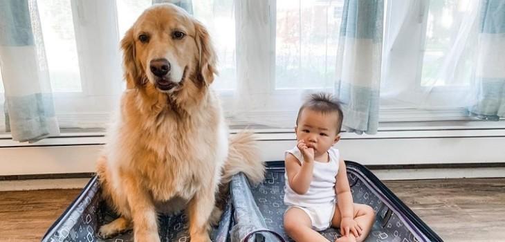 La increíble relación de la perrita Sadie y su pequeño dueño: lo más tierno