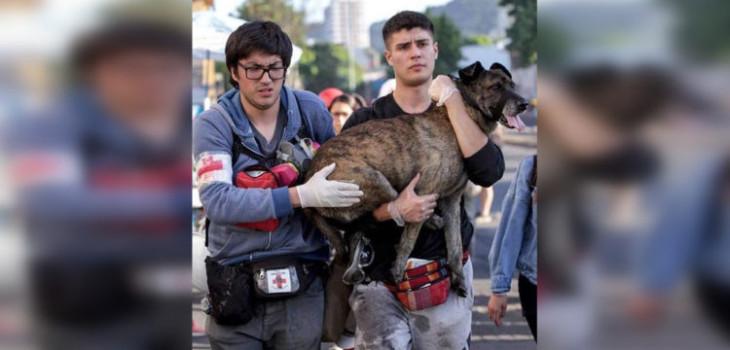 pepe perro emblema protestas concepcion