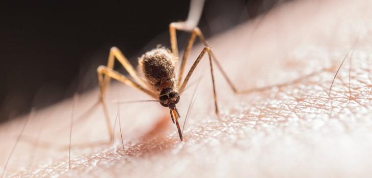 ¿No aguantas las picaduras de los mosquitos? Entonces empieza a dejar la cerveza