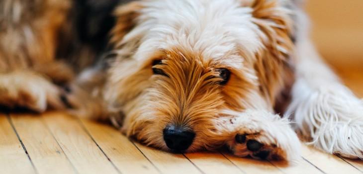 ¿No sabes cómo librarte de los pelos de tu perro en tus cosas? Conoce estos trucos para removerlos