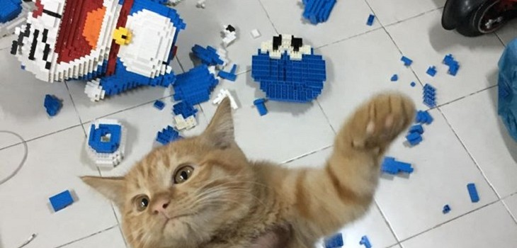 gato destruye figura lego