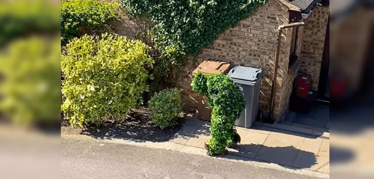 Particular escape de la cuarentena en Reino Unido se hace viral