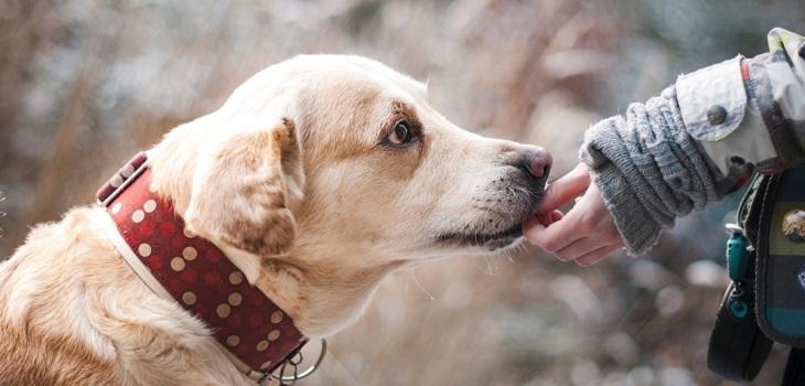 Perro, cuidados mascotas