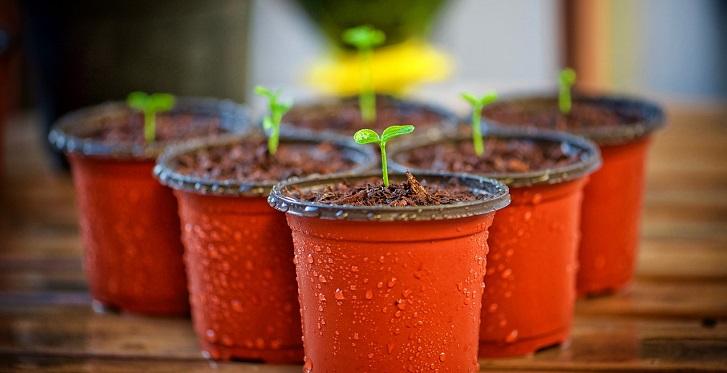 Plantas, huertos, semillas, macetero