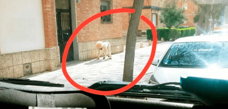 Hombre se disfraza de perro para evitar la cuarentena en España
