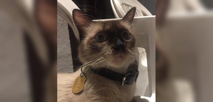 gato doble vida