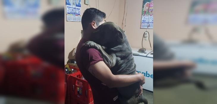 Joven pasó seis meses buscando a su perro perdido, lo halló y compartió emotivo reencuentro