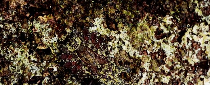 Reto de fotógrafo se vuelve viral: ¿eres capaz de ver al insecto camuflado?