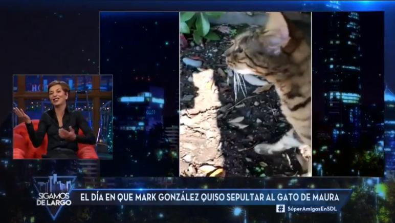 Gato de Maura Rivera