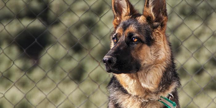 Murió Buddy, el primer perro en dar positivo a COVID-19 en Estados Unidos