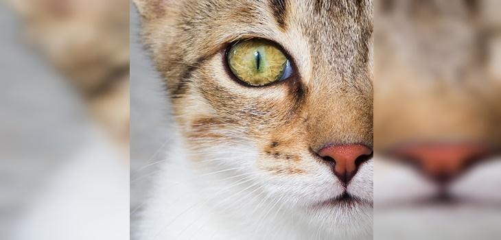 A los 31 años murió Rubble, el gato más longevo del mundo