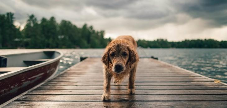 especialista explica lo que debes tener en cuenta si tu perro tirita