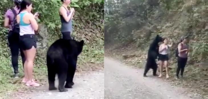 Viralizan impactante encuentro entre senderistas y un oso en México