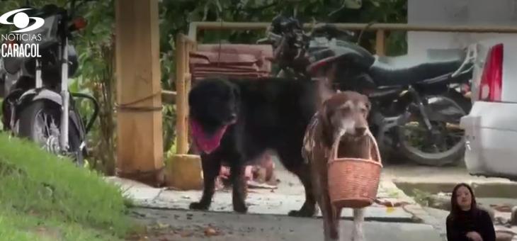 Caso de Eros, el perro 'delivery', la rompe en Colombia