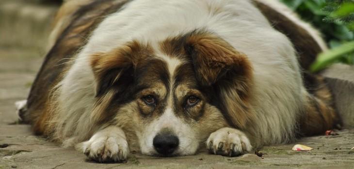 El confinamiento afecta a todos: los efectos que puede tener en la salud de tu perro la falta de sol