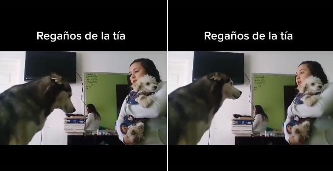 tierna reacción de perro en Tik Tok