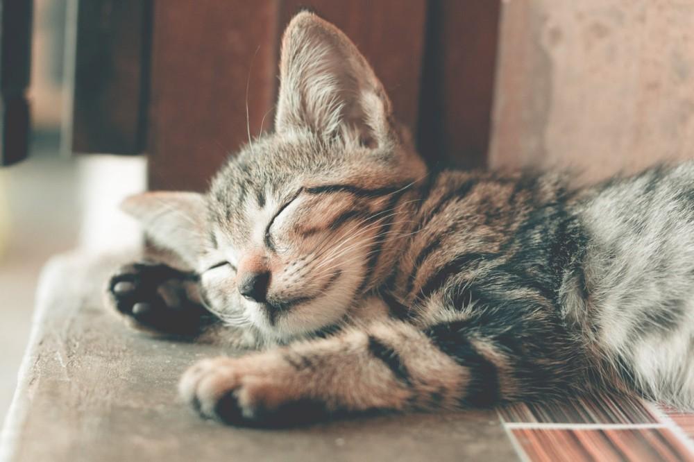 Mitos sobre los gatos